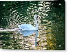Acrylic Print featuring the photograph Swan On Water  by Trace Kittrell