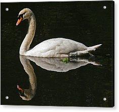 Swan Reflection Acrylic Print by John Topman