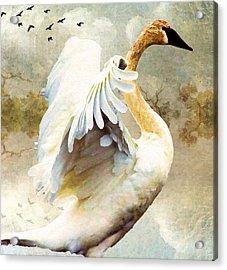 Swan Sense Acrylic Print