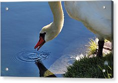 Acrylic Print featuring the photograph Swan Song by Cathy Donohoue