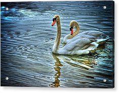Swan Song Acrylic Print by Dennis Baswell