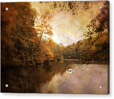 Swan Song Acrylic Print by Jessica Jenney