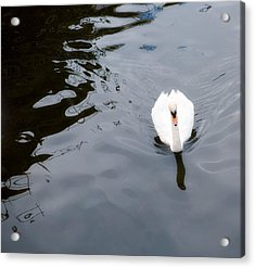 Swan Song Acrylic Print by Rebecca Cozart