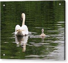 Swan Song Acrylic Print by Rona Black
