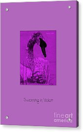Swanning In Violet Acrylic Print by Linda Prewer