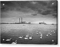 Swans And Ships. Acrylic Print by Gary Gillette