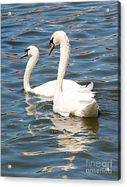 Swans And Swirls Acrylic Print by Carol Groenen
