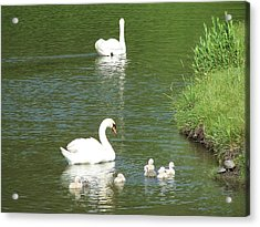 Swans And Turtles Acrylic Print by Teresa Schomig