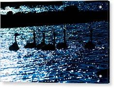 Swans By The Ocean Acrylic Print
