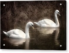 Swans For Life Acrylic Print by Jason Green