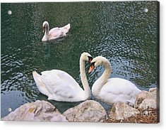 Swans In Love Acrylic Print by Lidia Anderson