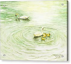 Swans In St. Pierre Acrylic Print