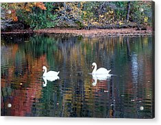 Acrylic Print featuring the photograph Swans by Karen Silvestri