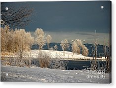 Acrylic Print featuring the photograph Swans On A Frosty Day by Randi Grace Nilsberg
