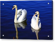 Swans On The Lake Acrylic Print