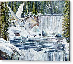 Swans Over Collonade Falls Acrylic Print by Steve Spencer