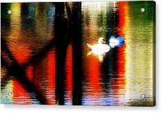 Acrylic Print featuring the photograph Swans Sojourn by Aurelio Zucco