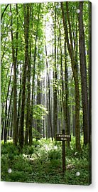 Swartwood Trail Acrylic Print by Jennifer Compton