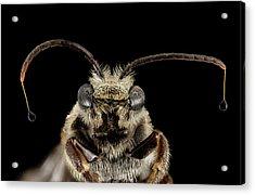 Sweat Bee Acrylic Print by Us Geological Survey