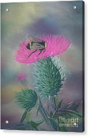Sweet And Prickly Acrylic Print