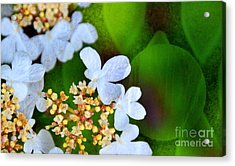 Acrylic Print featuring the photograph Sweet And Sour by Darla Wood