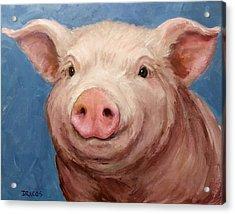 Sweet Baby Pig Portrait Acrylic Print by Dottie Dracos