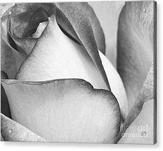 Sweet Black And White Rose  Acrylic Print by Sabrina L Ryan