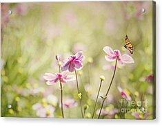 Sweet Butterfly Garden Acrylic Print