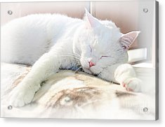 Sweet Dreams Acrylic Print by Andee Design