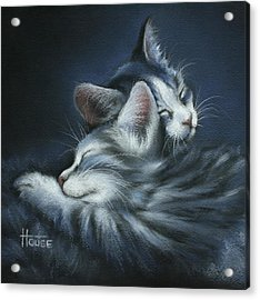 Sweet Dreams Acrylic Print by Cynthia House