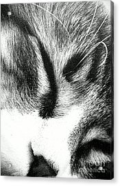 Acrylic Print featuring the photograph Sweet Dreams by Jacqueline McReynolds