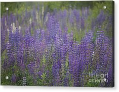 Sweet Floral Lullaby For You . Acrylic Print by  Andrzej Goszcz