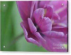 Acrylic Print featuring the photograph Sweet Fragrance by Simona Ghidini
