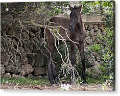 sweet heart - A tender foal wait his beloved mother  Acrylic Print