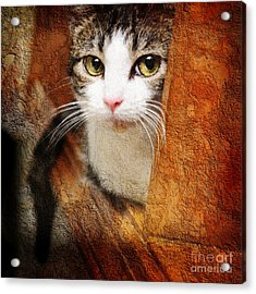 Sweet Innocence Acrylic Print by Andee Design