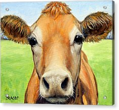 Sweet Jersey Cow In Green Grass Acrylic Print