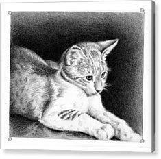 Sweet Kitty Acrylic Print
