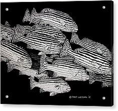 Sweet Lip School Acrylic Print by Denis Gloudeman