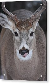 Acrylic Print featuring the photograph Sweet Lips by Rita Kay Adams