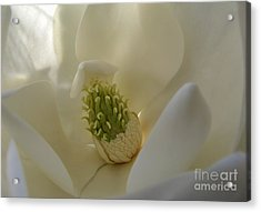 Sweet Magnolia Acrylic Print by Peggy Hughes