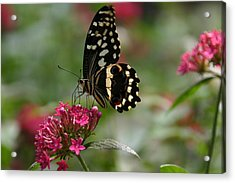 Acrylic Print featuring the photograph Sweet Nectar by Denyse Duhaime