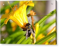 Acrylic Print featuring the photograph Sweet Nectar by Jerome Lynch