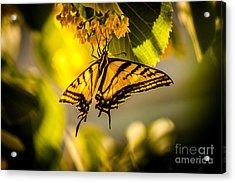 Sweet Nectar Acrylic Print