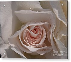Sweet Opening Acrylic Print
