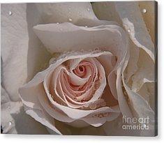 Sweet Opening Acrylic Print by Agnieszka Ledwon