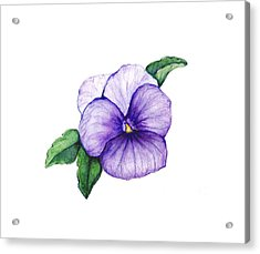 Acrylic Print featuring the painting Sweet Pansy by Heidi Kriel