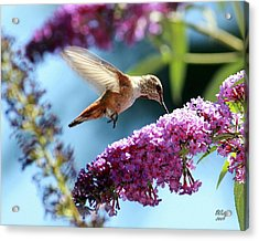 Acrylic Print featuring the photograph Sweet by Patrick Witz
