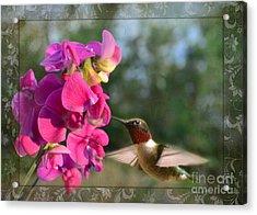 Sweet Pea Hummingbird IIi Acrylic Print by Debbie Portwood