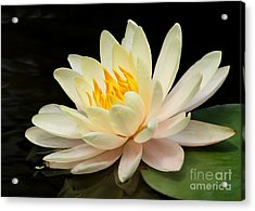 Sweet Peach Water Lily Acrylic Print by Sabrina L Ryan