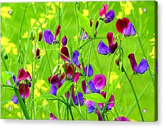 Acrylic Print featuring the photograph Sweet Peas by Byron Varvarigos